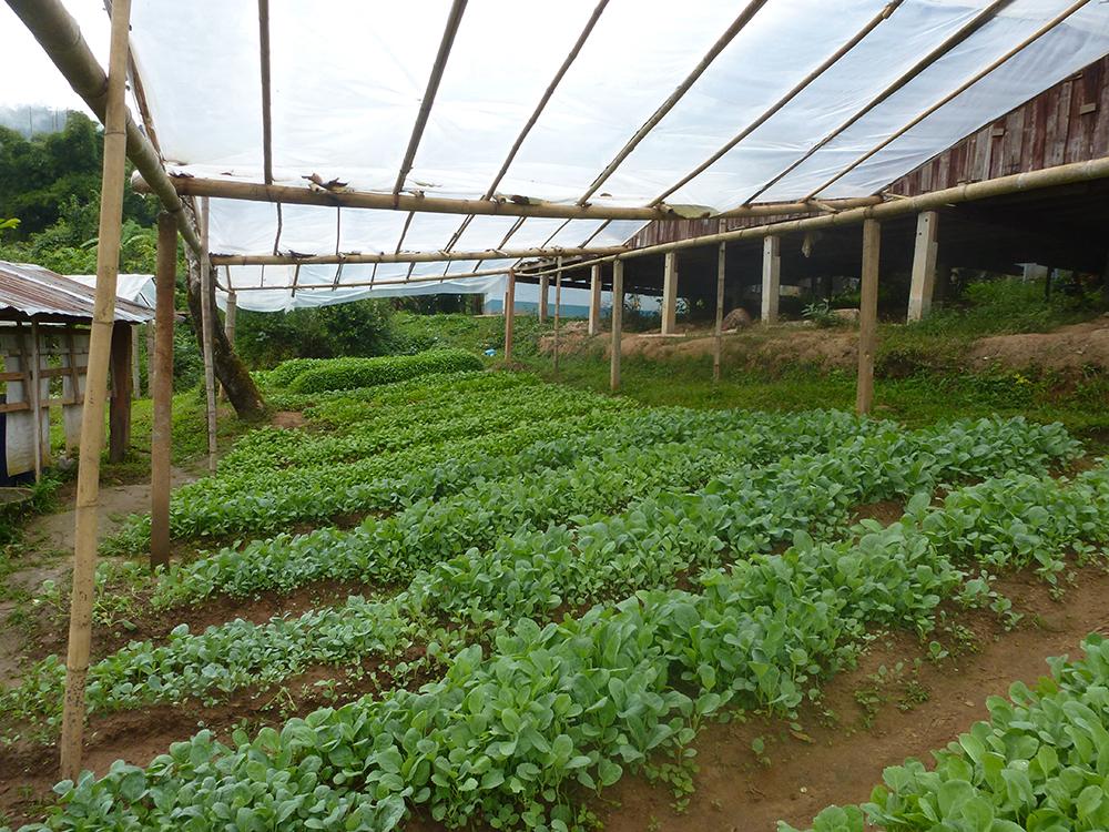 school-garden1